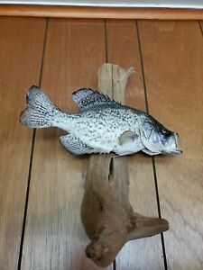 Mounted Crappie