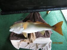 "Redfish Full Mount in a Driftwood, 38"" Long"