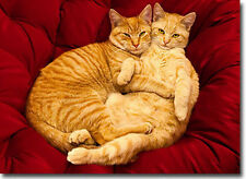 2 Cats Hugging Valentine's Day Card - Greeting Card by Avanti Press
