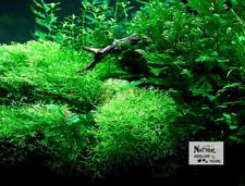 Aquatic Plant - Riccia fluitans Covered Black River Stone - Set of 3 Stones