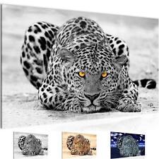 WANDBILDER XXL BILDER Afrika Leopard VLIES LEINWAND BILD KUNSTDRUCK 00031P