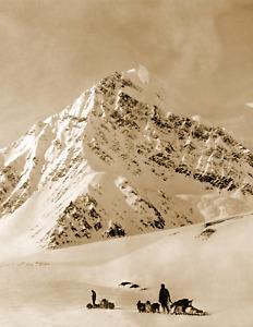 "1900-1930 Dogsleds at Mt. McKinley, Alaska Vintage/ Old Photo 8.5"" x 11"" Reprint"