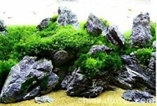 New 5lbs Black Seiryu Stone Aquarium Aquascaping Iwagumi Amano Japanese Free S&H