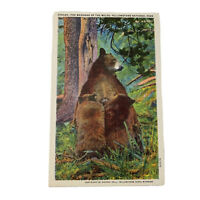 Yellowstone National Park Wyoming Mother Bear & Cubs Linen Vintage Postcard