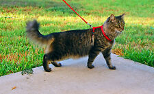 Adjustable Nylon Pet Cat / Rabbit Harness & Leash ~ Collar with Lead ~ 3 Colors