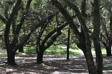 Lake Wales, Florida Land Sale .31 Acres / No Reserve