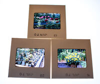 Vintage 35mm Photo Transparency Slides - Plants 1970 | Lot of 3