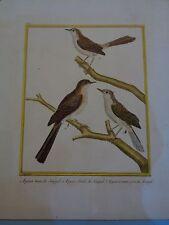 Antiguo Grabado A Mano Color aves exóticas Martinet a bordo