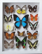 LUXURY STYLE REAL 14 MIX BEAUTIFUL BUTTERFLY WITH ULYSSE IN WHITE FRAME DISPLAY