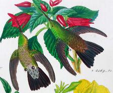 1857,REICHENBACH HUMMINGBIRDS FINE HAND COLOR ENGR. FOLIO U1D