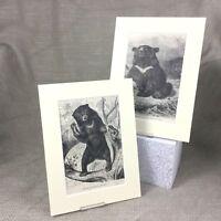 1894 Antico Impronte Himalayano Nero Orso Malese Orso Originale 19th Secolo