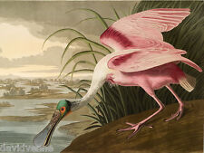 John J Audubon rosetta spoonbill 9 x 12 inch 18 count Needlepoint Canvas