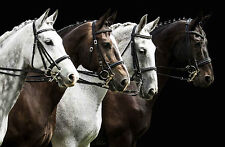 STUNNING FOUR HORSES CANVAS #23 QUALITY HORSE A1 CANVAS WALL ART PICTURE