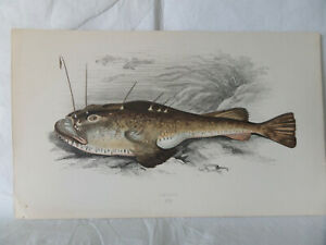 3 Original Old Antique Fish Prints