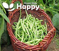BLUE LAKE - CLIMBING FRENCH BEAN - 70 SEEDS - HERITAGE - Vegetable bean seeds
