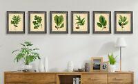 OAK TREE PRINTS SET 8x10 inch Botanical Art Rustic Picture Acorn Green A4 Leaf
