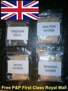 WALTER WORM BANANA WORMS MICRO WORM (all 75g) VINEGAR EEL LIVE STARTER CULTURES.