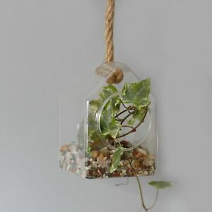 All Glass Terrarium - Hanging House on Rope Flower Vase Hydroponic Plant Holder