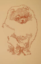 Pomeranian Dog Signed Art Lithograph #46 Stephen Kline adds your dogs name free.