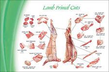 """Lamb Cuts Butcher Shop Poster Store Print 24 x 16"""""""