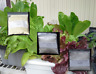 Masterblend Tomato & Vegetable Fertilizer Hydroponics 4-18-38 Combo Kit.