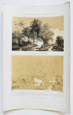 1830 Grande lithographie Dauphiné Grande Chatreuse perspective paysage Thénot