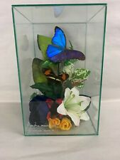 Vtg Glass Terrarium Real Butterflies Taxidermy Morpho Menelaus Heliconius Sara