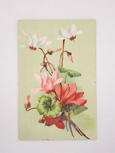 Antique Pink White Cyclamen Flowers Embossed Postcard c.1912 Posted