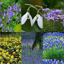 3 x Humphreys Garden Naturalising Collection. A long lasting carpet of colour