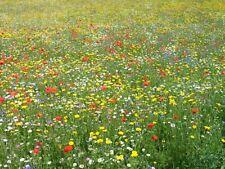 Poppy & Cornfield Annual Wild Flower Seed Mix 7 - 1g/5g/10g - 100% Flower Mix