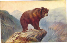 Animales - cpa - El oso brun