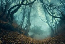 Hazy Halloween Forest Photo Scene 10x8ft Background Photography Props Backdrop