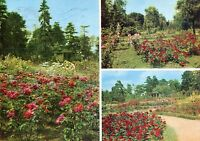 Alte Postkarte - Rosarium Sangerhausen