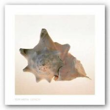 Conch Tom Artin Art Print 16x16