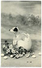JOLI PETIT CHIEN DANS UN OEUF. BEAUTIFUL LITTLE DOG IN A EGG. PAQUES. EASTER.