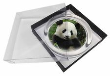 Beautiful Panda Bear Glass Paperweight in Gift Box Christmas Present, ABP-1PW
