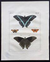 VERY RARE 1773 DRURY Vol.2 FOUR BUTTERFLIES Pl#4 HandColored Copper Plate IV