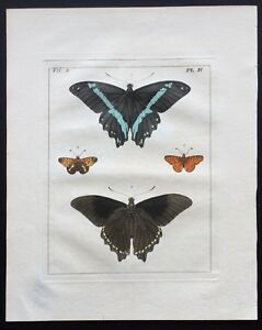 VERY RARE 1773 DRURY Vol.2 FOUR BUTTERFLIES Pl#4 HandColored Copper Plate IV