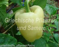 🔥 🌶️ White bell Paprika weiss 10 frische Samen Balkon Kübel ertragreich