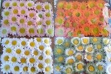 24 Stoffblumen Klebepunkt Kleben Basteln Tischdeko Streublumen Margerite Blüten