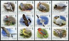 More details for st helena birds on stamps 2015 mnh bird definitives tropicbirds terns 12v set