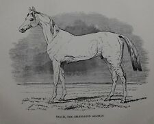 1831 ANTIQUE FARRIER HORSE PRINT ~ IMAUM ~ CELEBRATED ARABIAN