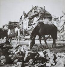 Werner Bischof Photo Print 21x30 Horses Pferde Ruinen Ruins Berlin Germany 1946