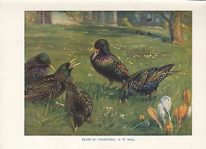 Vintage Oiseau Imprimé~