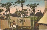 BERMUDA - Paw Paw Trees