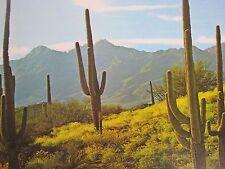 "Vintage Mid Century Arizona Lithograph Sonoran Desert Laminated Print 17"""
