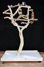 Manzanita Parrot Tree Bird Stand Toy Play Gym like Java Wood Sandblasted SB51M3