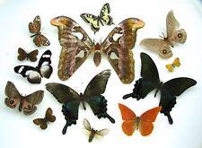 Schmetterling und Motte Sammlung für Kunstwerk Fotografie X 13 Set Exemplare
