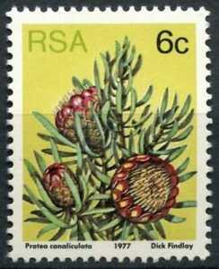 South Africa 1977-82 SG#419b 6c Proteas, Plants Definitive P14x13.5 MNH #E9008