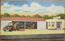 Largo, FL 1940s Linen Advertising Postcard: Orange Blossom Citrus Groves - Fla